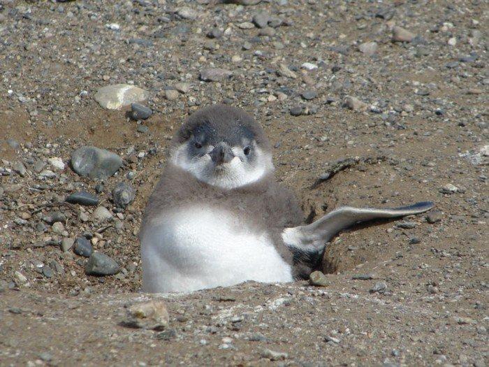 #MagallanesyAntártica ✵ Isla Magdalena ✵...