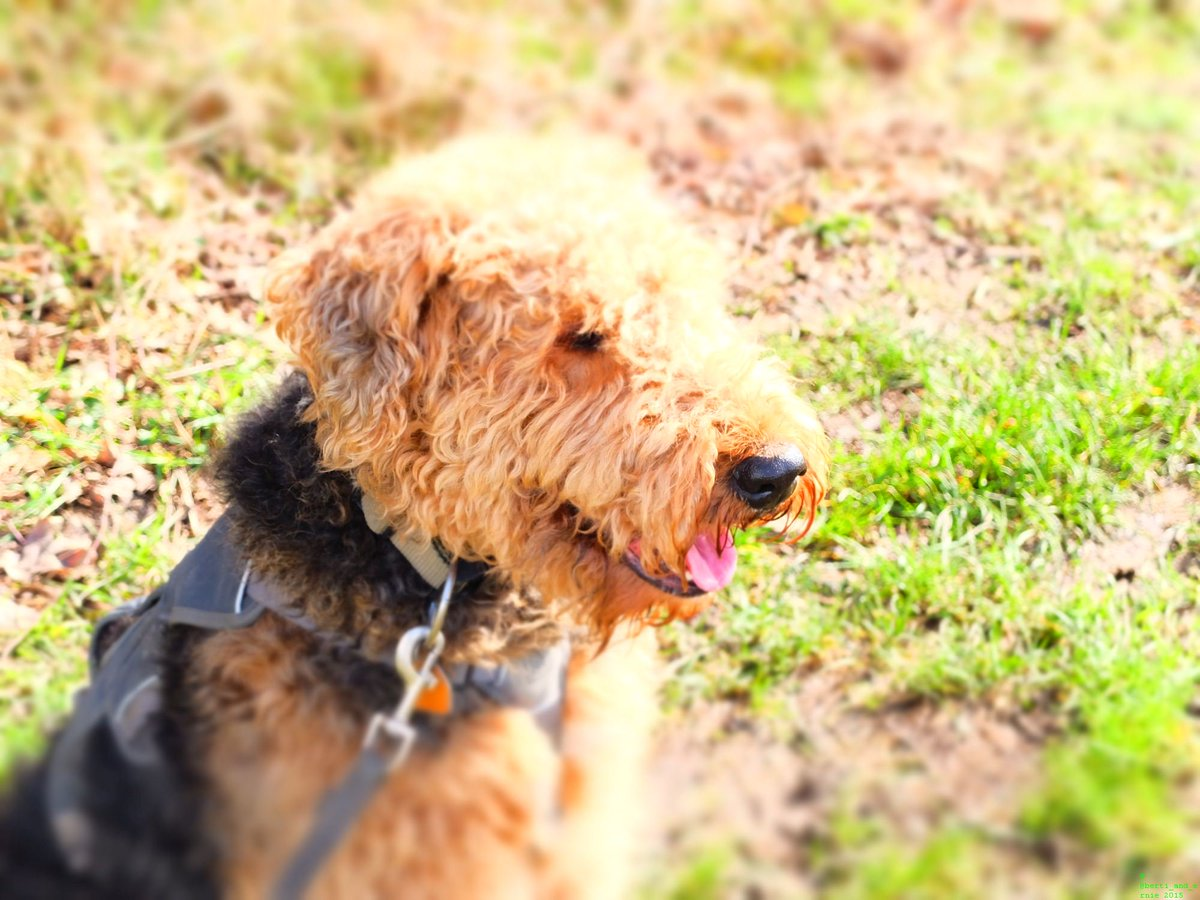 #Smile with me and your day gets better! #motivation #dogsarejoy<br>http://pic.twitter.com/nGqMrzt2hk