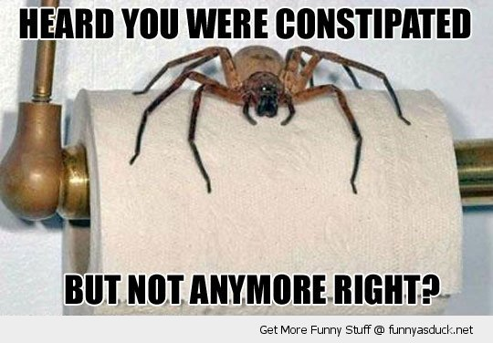 Cheryl Feeley On Twitter How They Cure Constipation In Hogwarts Funnyfail Funnyspider Humor Funny