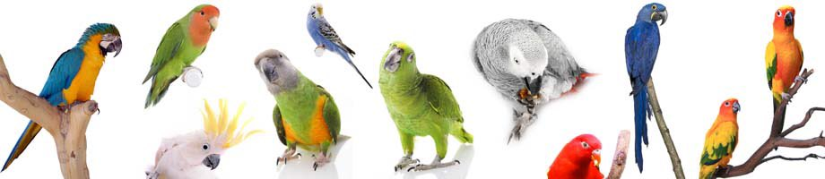 Calling all #bird owners! If you own / have previously owned a #psittacine species please take this short survey!  https://www. surveymonkey.co.uk/r/SDFL3D5  &nbsp;  <br>http://pic.twitter.com/Puf7cP6CWD
