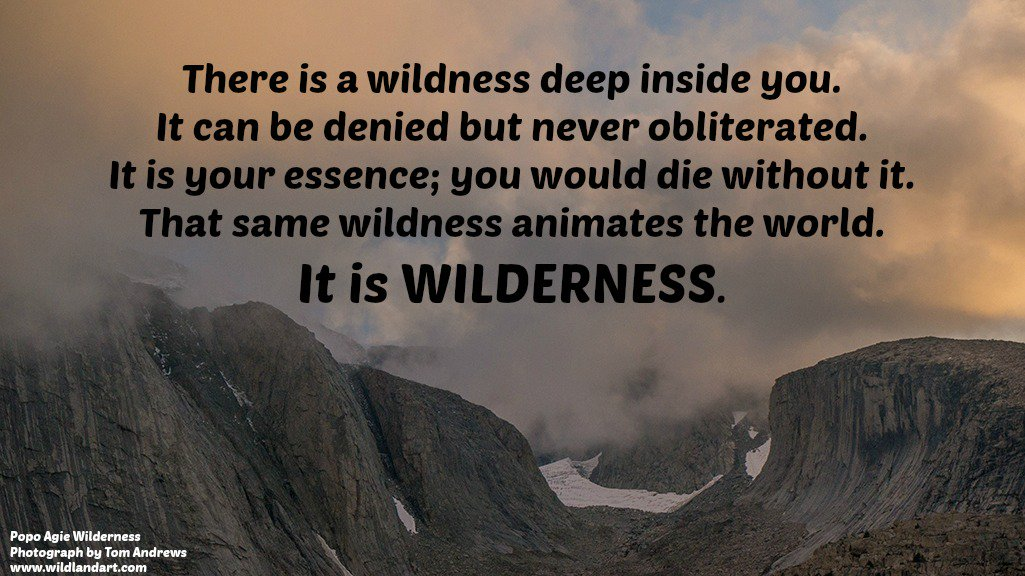 Answer the call of the wild! Tell Congress to stand up for #Wilderness, #wildlife and our #publiclands:  http:// bit.ly/2j82bkr  &nbsp;   #resist<br>http://pic.twitter.com/zU1R759bvG