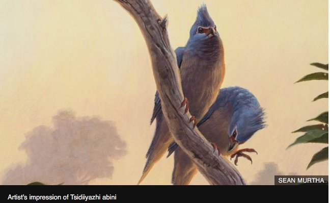 Fossil sheds light on bird evolution after asteroid strike  http:// ow.ly/QUBn30dRWfv  &nbsp;   #palaeontology #ornithology @BBCScienceNews<br>http://pic.twitter.com/FhLQWnArqJ