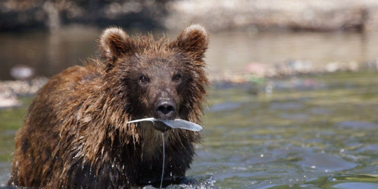 Microsoft targets Fancy Bear&#39;s domains  http:// crwd.fr/2unQhrZ  &nbsp;   #Marketing #SEO #makeyourownlane #defstar5 #Mpgvip #spdc #love #blog #quote<br>http://pic.twitter.com/WD8aBxsuoh