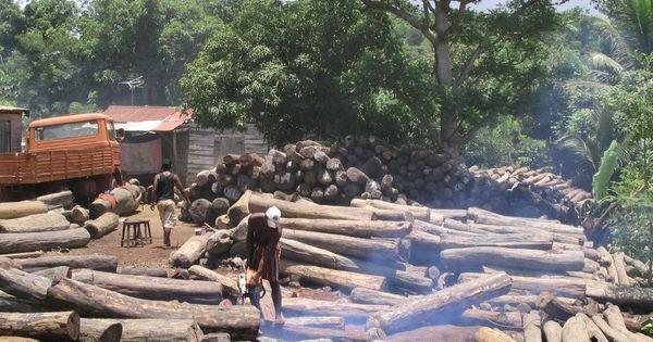 Clovis Razafimalala: «A #Madagascar, tous les défenseurs de l'#environnement sont menacés» https://t.co/f2uIYUl4Xc