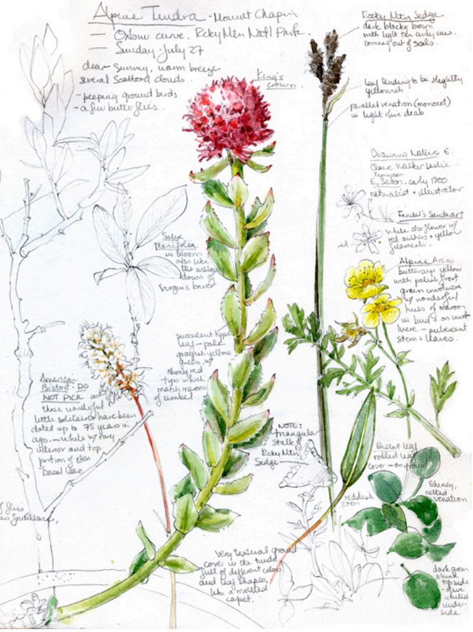 Our 2017 Ed Series Wkshp just announced: Create your own field guide #illustration in sunny CA:  http:// bit.ly/2uWwZfZ  &nbsp;   #sciart #botany<br>http://pic.twitter.com/ITKOwlxFD0