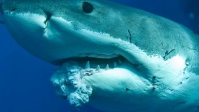 It&#39;s a myth that #sharks can&#39;t get cancer. If they were human they&#39;d say: #SaveACA. They&#39;d also be disappointed in McCain #SharkWeek<br>http://pic.twitter.com/ItCEa7Vnqi