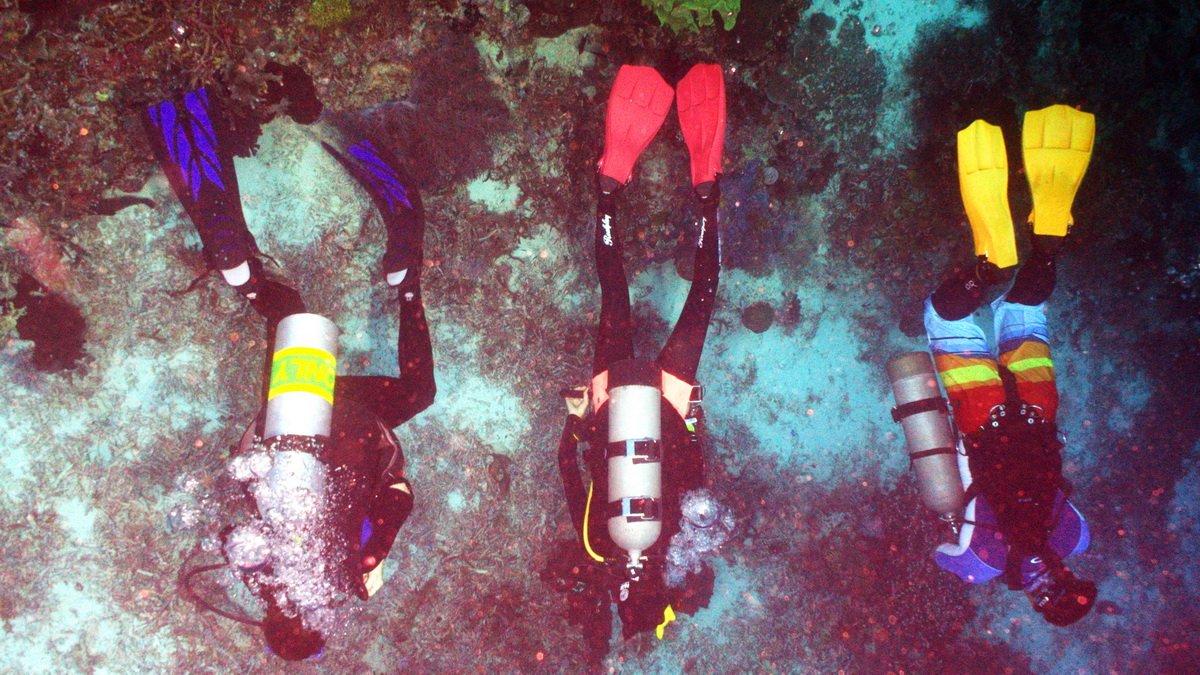 Ladies, ready for some deep, tropical blue? Scuba diving isn&#39;t just a boys club:  http://www. tripwellness.com/women-scuba-di vers/ &nbsp; …  #Padi #scubadiving <br>http://pic.twitter.com/mJDRrGGFGK