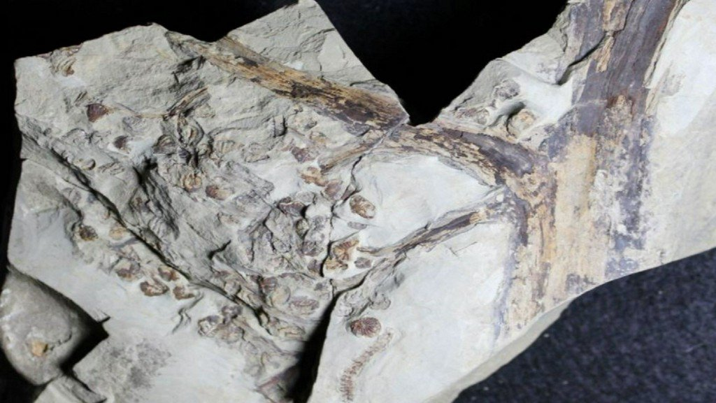 Fossil discovered in Parkville is three times older than a T-rex https://t.co/1cB2N8vYRD