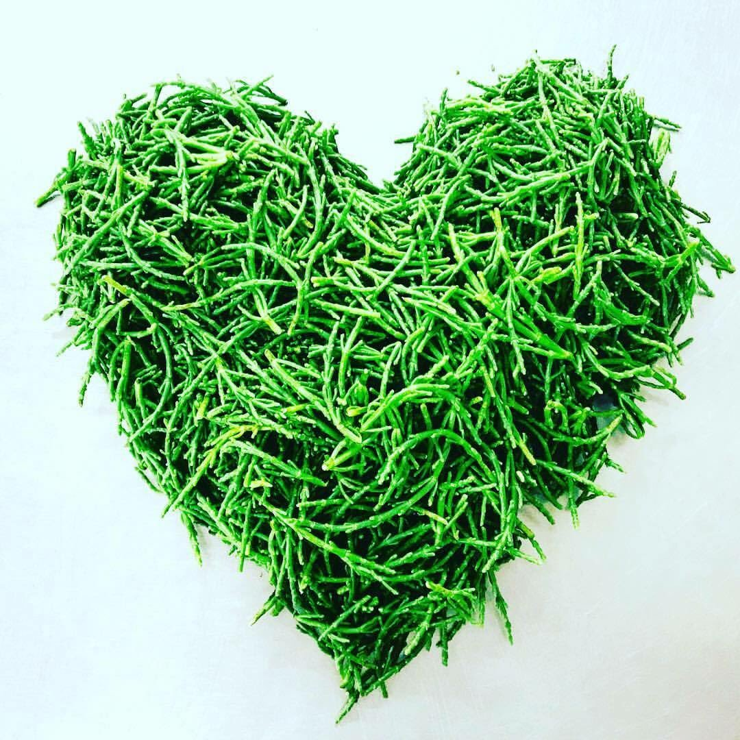 We certainly our daily fresh deliveries! @Delifreshltd #samphire #holmfirth #huddersfield #yorkshire #fresh #food #love<br>http://pic.twitter.com/xcWNCxFlGG