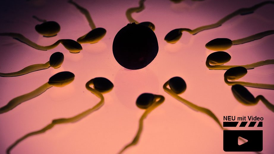 zu wenige spermien