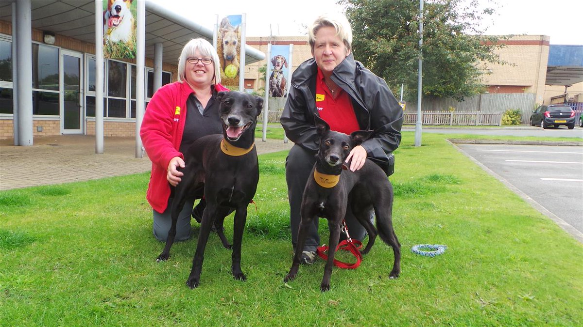 Sweep &amp; Sooty love going for walks &amp; love their #volunteers Tracey &amp; Sue!  http:// bit.ly/2ukzB4q  &nbsp;    http:// bit.ly/2uF9Zyv  &nbsp;   #specialsomeone<br>http://pic.twitter.com/sqp9DTfE0E