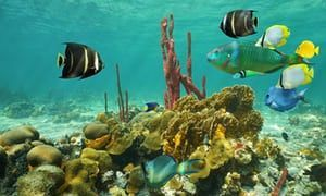Mexico launches pioneering scheme to insure its coral reef  http:// scuba.im/2uw5rvB  &nbsp;   #scubadiving <br>http://pic.twitter.com/ljjdB9FrN7