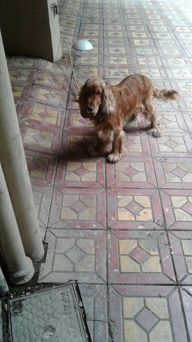 My friend found this lost/abandoned sad fellow in Juhu Jvpd scheme please find him his home or you could adopt him too ...pls RT https://t.co/aYVjYs4sN9