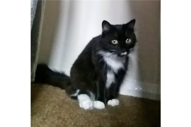 Mystery is a highly inquisitive, affectionate and playful girl . She&#39;d love a garden of her own  http:// tinyurl.com/yavms2nb  &nbsp;   #CatsofTwitter <br>http://pic.twitter.com/L2sXUBc1UV