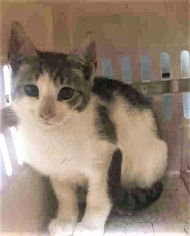 JUST ADDED! SAMI -A1119786 Follow me here for updates and status: nyccats.urgentpodr.org/sami-a1119786/