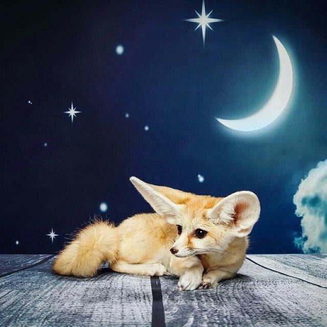 Спокойной ночи лиса открытки