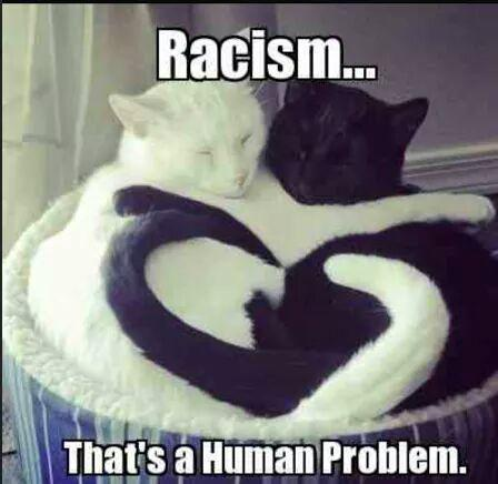 Until humans ceed rights to #animals the struggle for #HumanRights will fail   #Speciesism is the #Racism we are all guilty of  Go #vegan <br>http://pic.twitter.com/Eo4bXibwjM