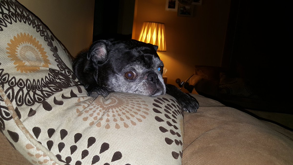 When is mom going to be home? #tinkerbell #pug #awe <br>http://pic.twitter.com/yatNUweZ9W