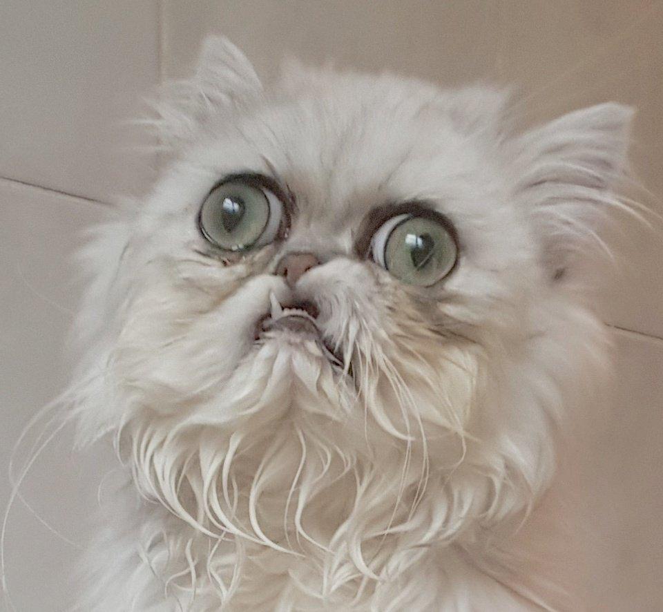 Cat Weird Meme