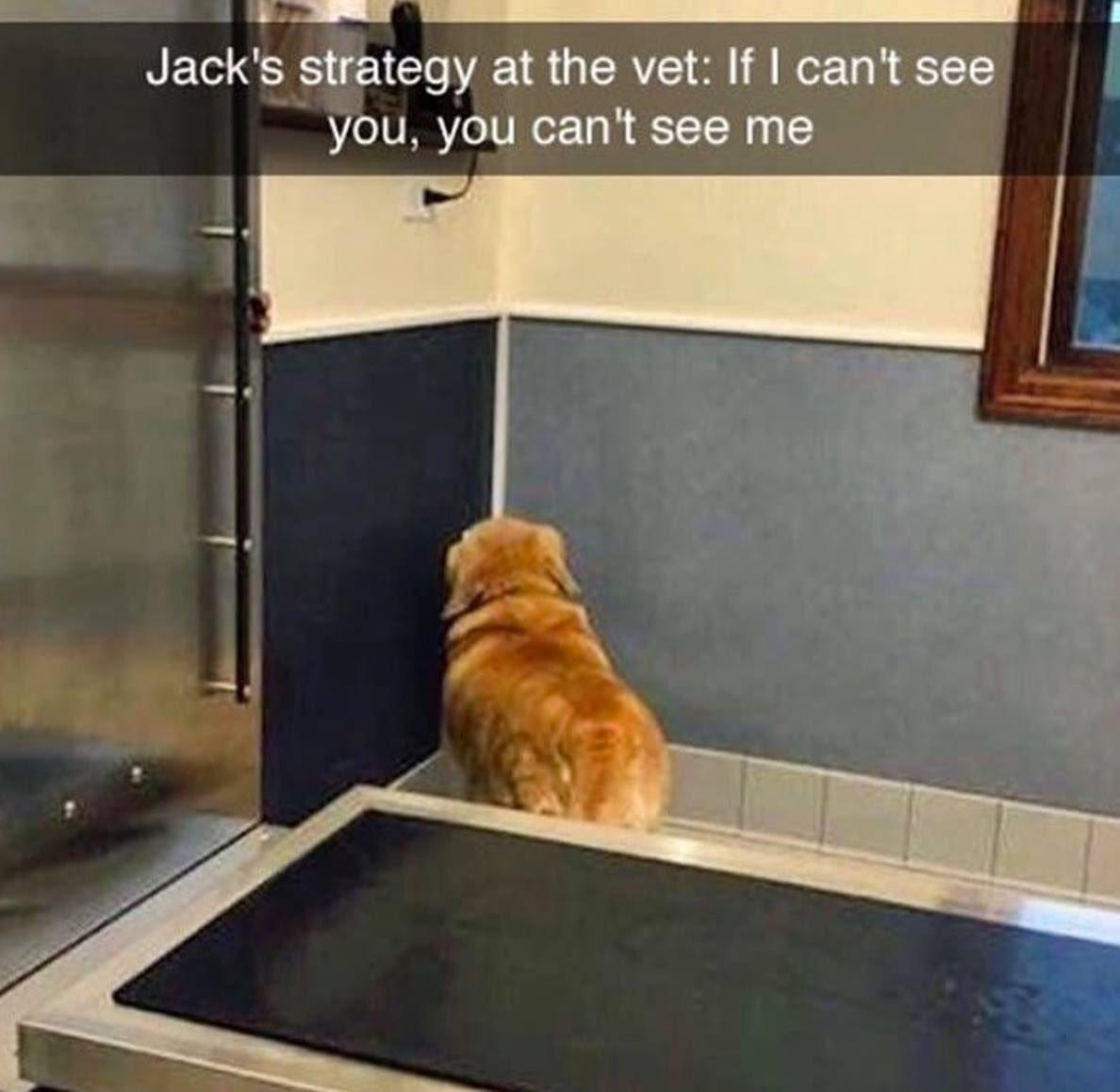 At the #vet <br>http://pic.twitter.com/0JRrjAqIdv