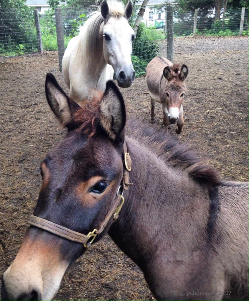 Morning rescue pals #equine <br>http://pic.twitter.com/YtEszxdKE8