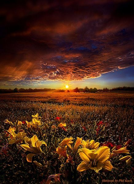 See the light in others, And treat them as if that is all you see. Dr. Wayne Dyer #gratitude #writing #film #acting #Art Phil Koch<br>http://pic.twitter.com/27atv4kNQf