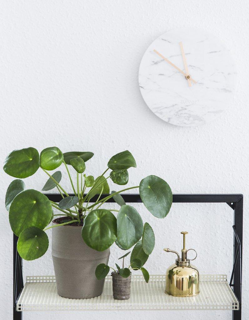 #Deco Zoom sur une plante résolument design : le Pilea Peperomioides https://t.co/PT5DwcEmFC @ELLEDecoFR