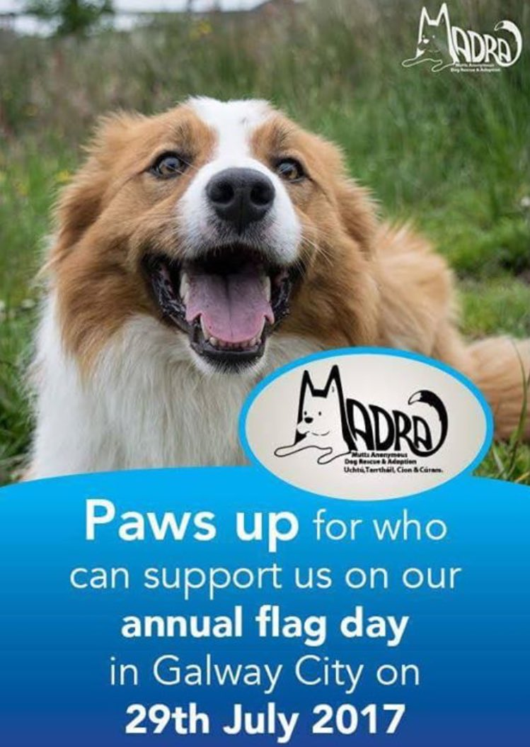 Last call out for #doglover #volunteers to help us on Shop St #Galway this #Saturday 2 hours to spare? Email info@madra.ie #animalwelfare<br>http://pic.twitter.com/fv3tjtHTbC