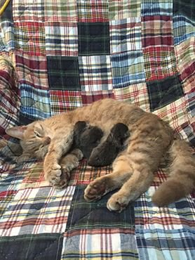 I arrived home last night to the announcement of a new arrival @DebsMahoney  http:// buff.ly/2v7H9uL  &nbsp;   #CottageCountry #vet <br>http://pic.twitter.com/noIAXz0Z8f