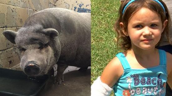 400-pound pig attacks 3-year-old in Alabama https://t.co/tfekLT1Vdo