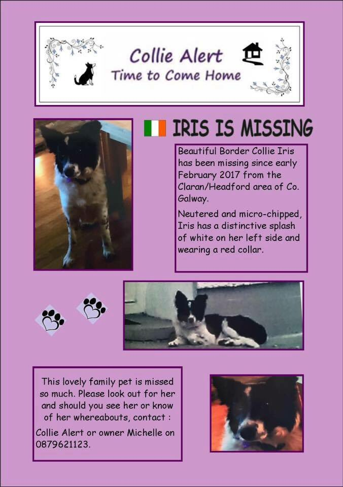 How many of these #missingdogs have been taken to #vet since #missing ? They won&#39;t of been #Scanned #findIrisBC #Rafiki #helpfindLucky MEGAN<br>http://pic.twitter.com/zE7ojMRYMb