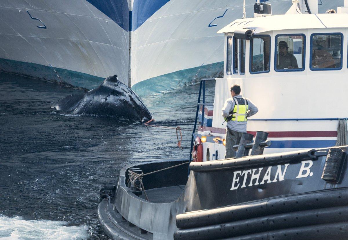 Ketchikan Daily News On Twitter Grand Princess Cruise Ship - Whale cruise ship