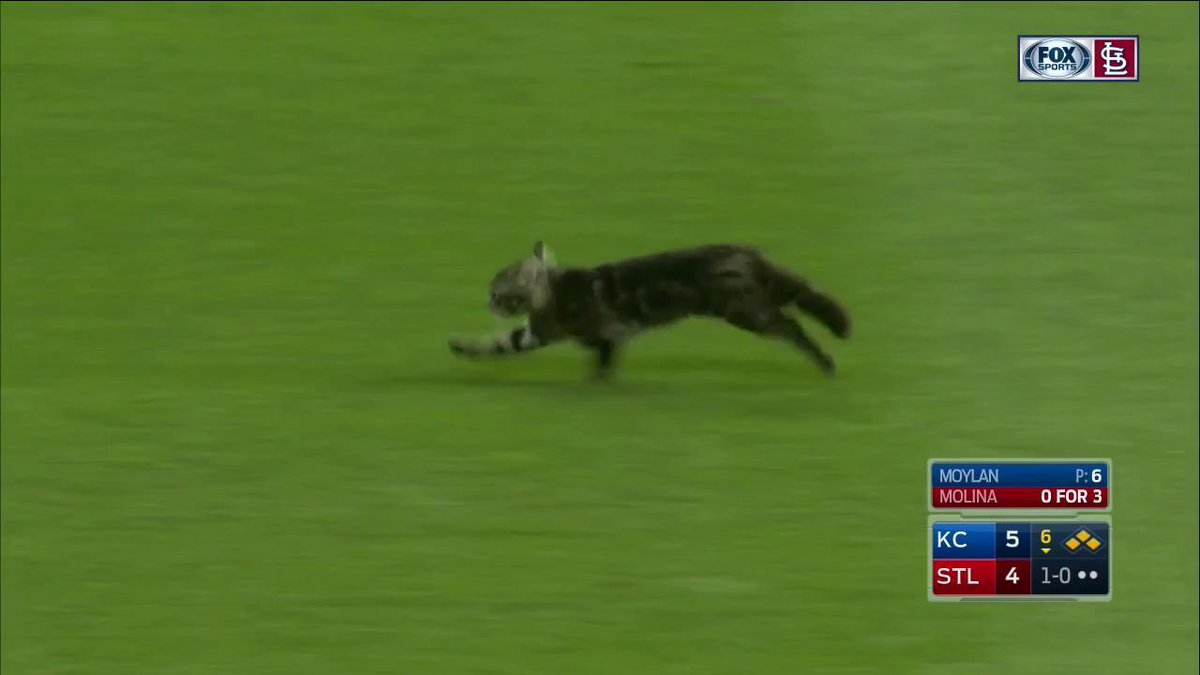 YADI HITS A GRAND SLAM AFTER THE RALLY CAT INVADES THE FIELD! RALLY CAT! RALLY CAT! #STLCards https://t.co/BKFu1D1Ist
