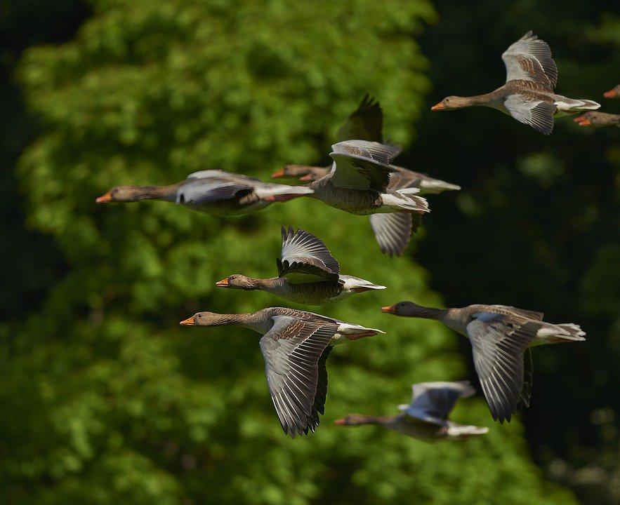 Перелётные птицы презентация для дошкольников