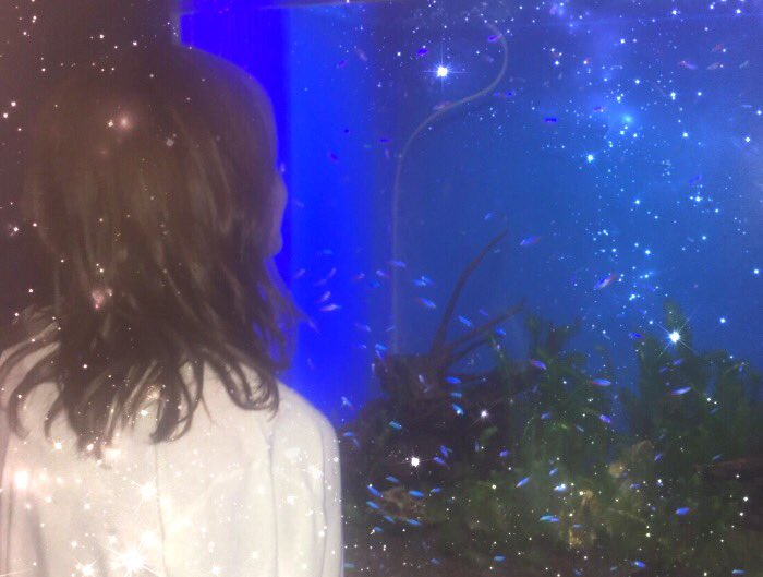 暑すぎる😔涼しい水族館に癒されに行きたいなぁ。品プリの水族館の年パスをわたしは持っているのです😎ふふん https://t.co/gD4PP...