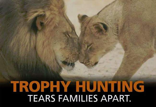 Today is #WorldLionDay. How can we call ourselves 'civilised' if we still hunt them for 'sport'?? RT if u want a BAN