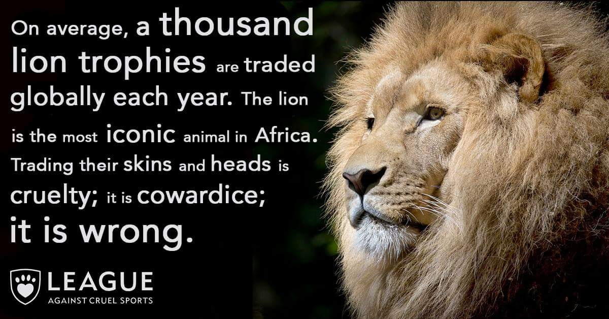 Lion numbers have crashed 40% in recent years. RT if you agree killing them for 'sport' is just WRONG. #WorldLionDay
