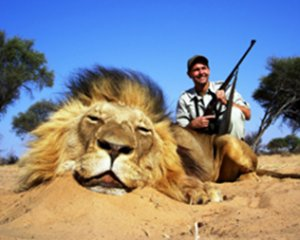 Lion numbers are crashing. It's officially 'vulnerable to extinction'. So WHY is trophy hunting LEGAL? #WorldLionDay