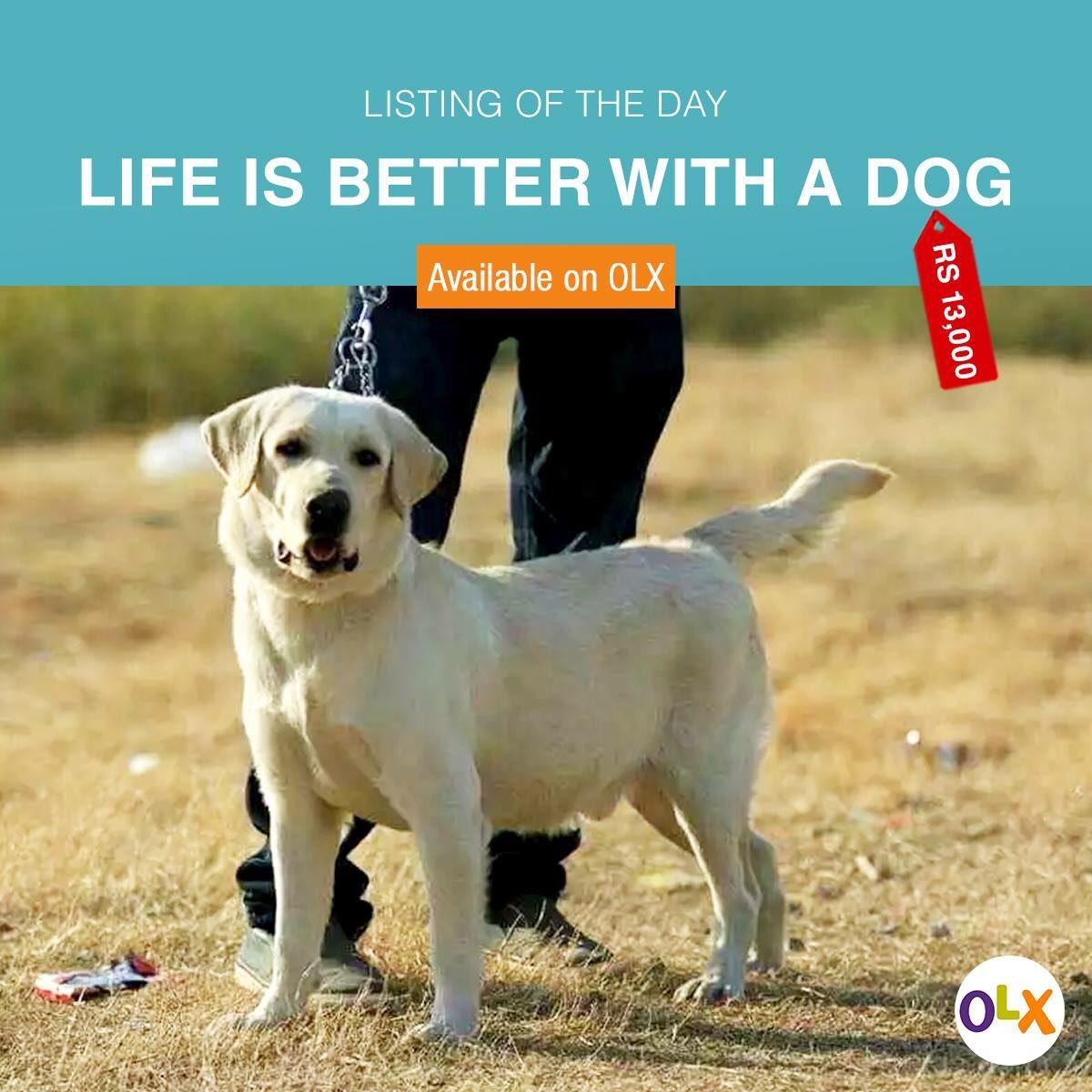 Bloemfontein olx dogs pakistan