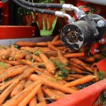 Image for the Tweet beginning: Carrot season is around the