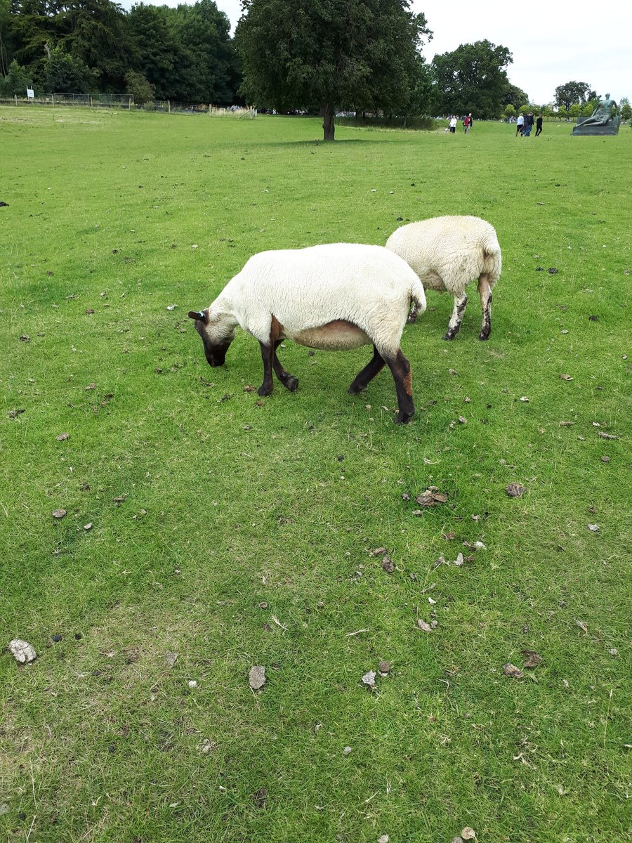 My favourite moment is seeing a #HenryMoore in the middle of a grassy field surrounded by sheep!! <br>http://pic.twitter.com/ZPNTIdtbBX