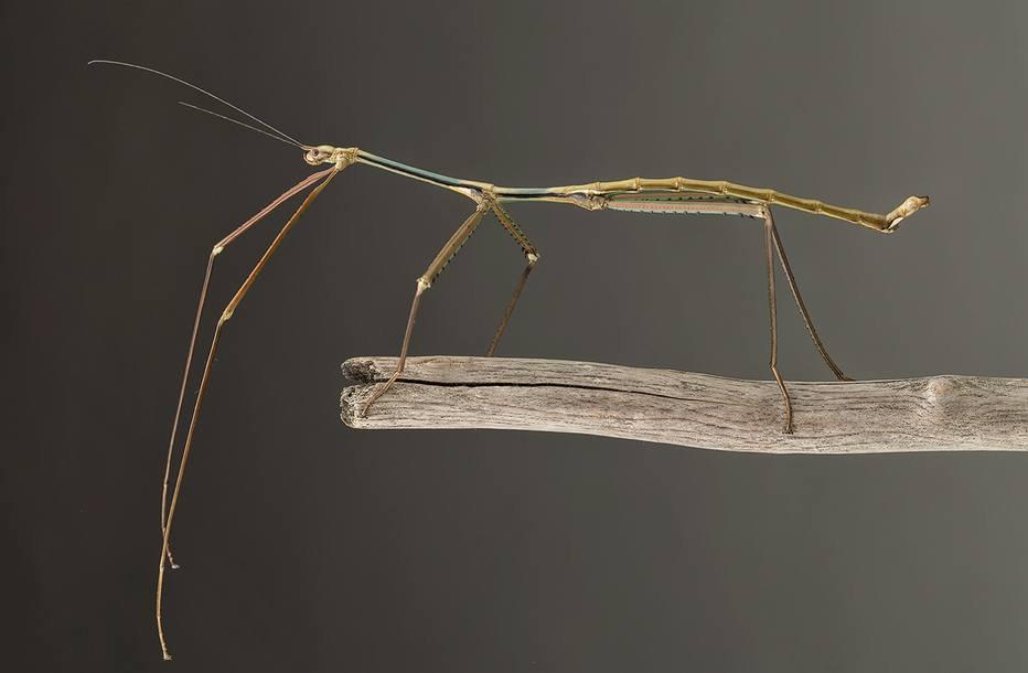 MEDO: Cientistas chineses criam maior inseto do mundo, com 64 cm https://t.co/EH0BzU3isb
