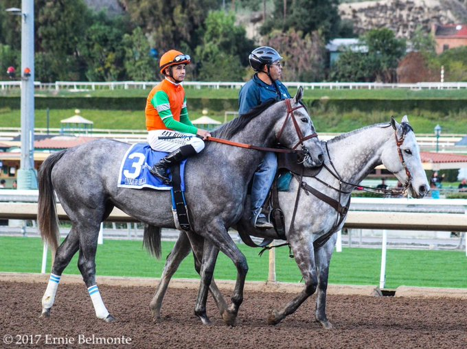 Happy Birthday to Hall of Fame jockey Mike Smith. Here he is on UniqueBella earlier this year before one of her wins