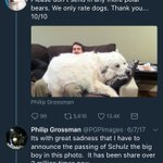 Schultz, the polar bear we posted a while back, has a new legacy puppy stories