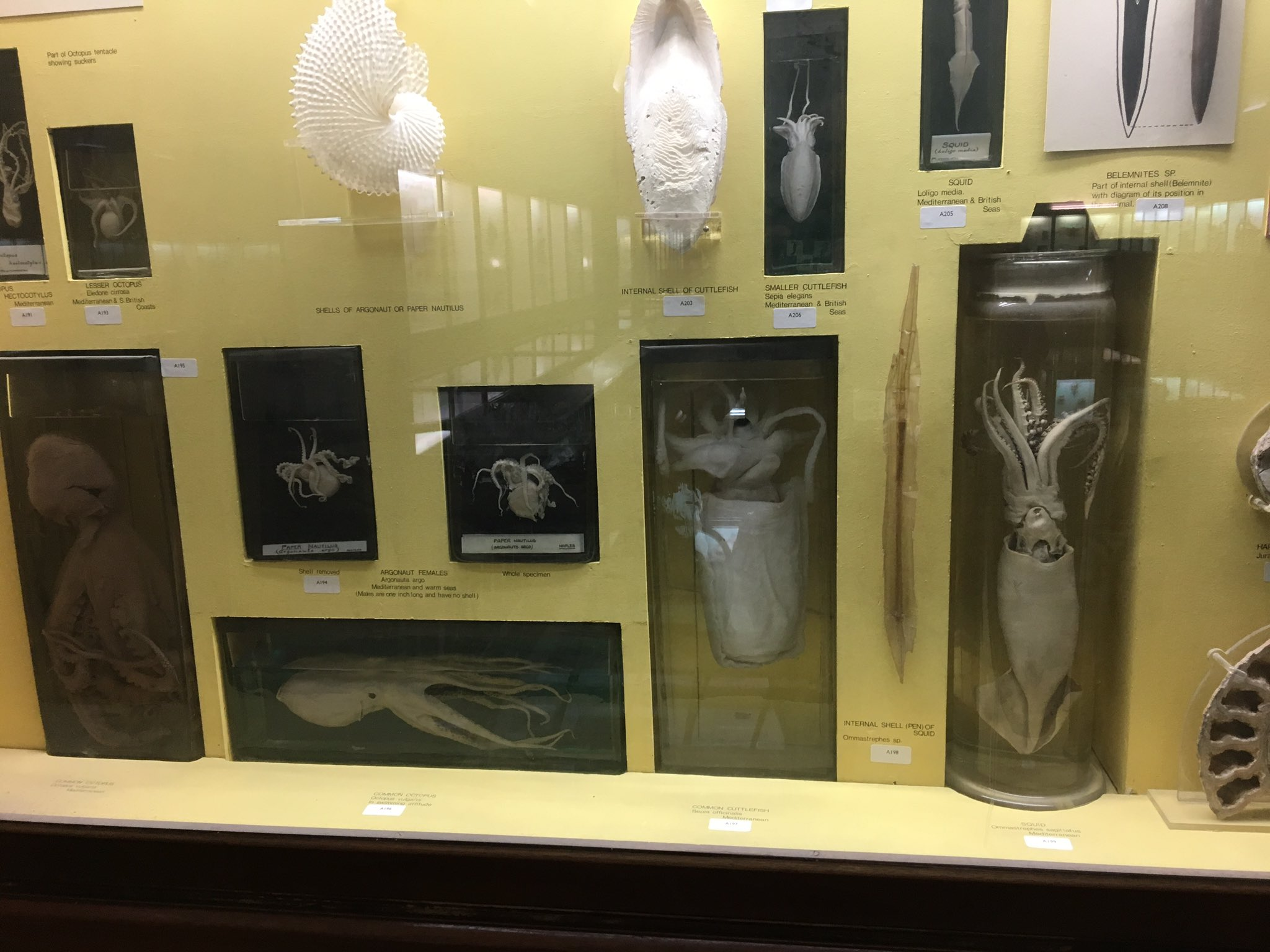 What is dead may never die. House Greyjoy is well represented by our collection of squid and ocotopods RT if you're Greyjoy #Takeoverday https://t.co/jy8eLS80wP