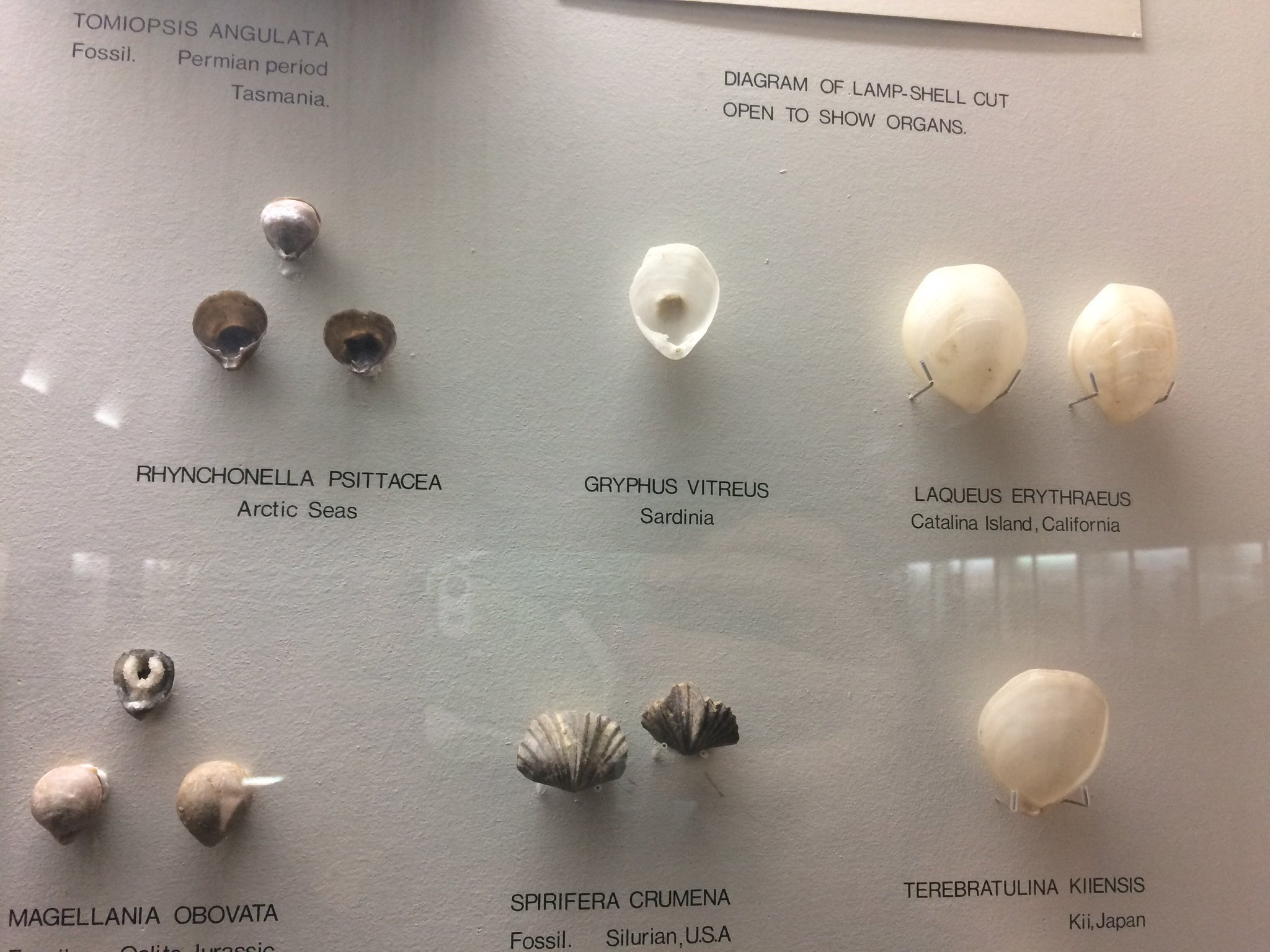 Six white shells for the House of Westerling. Retweet if you're team Westerling! #stoptryingtomakewesterlinghappen #takeoverday https://t.co/NQ8i0efoTi