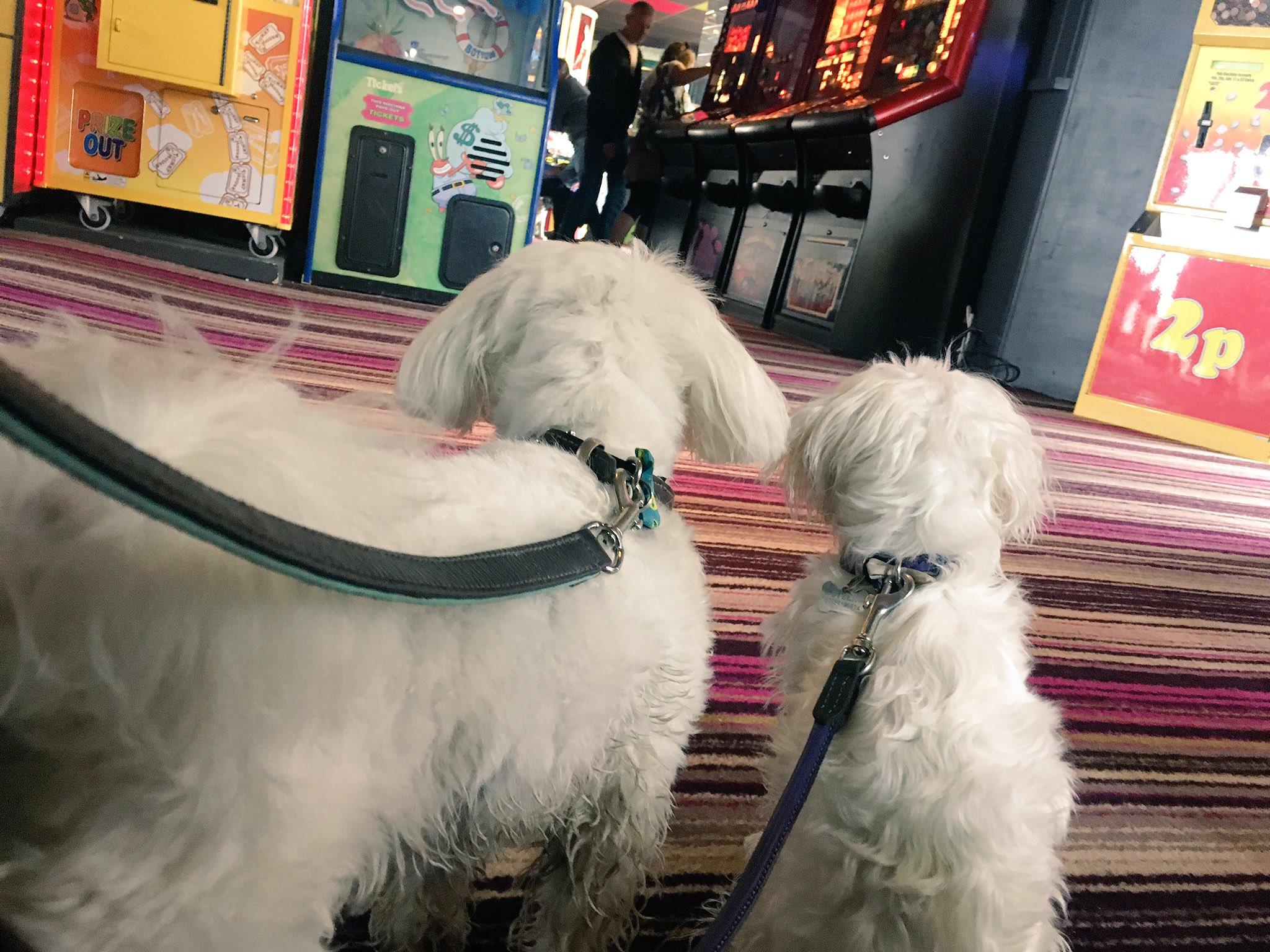 Dogs loving the arcade. #BitRainy #Devon https://t.co/aQdSq1COPs