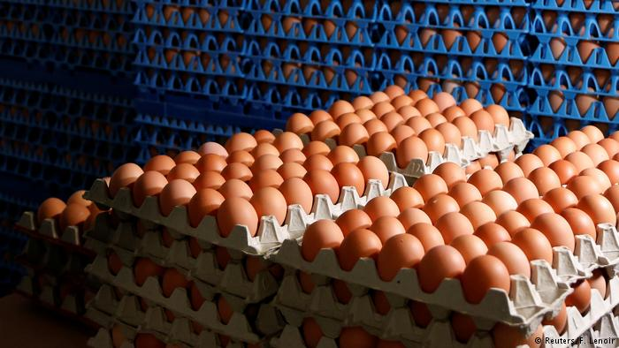 Uova contaminate all'insetticida Fipronil: ritiro dai supermercati in Inghilterra