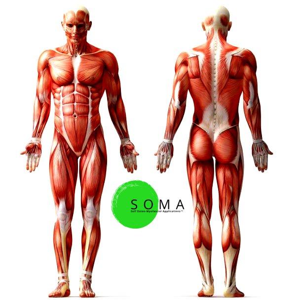 beautiful human body - 736×736