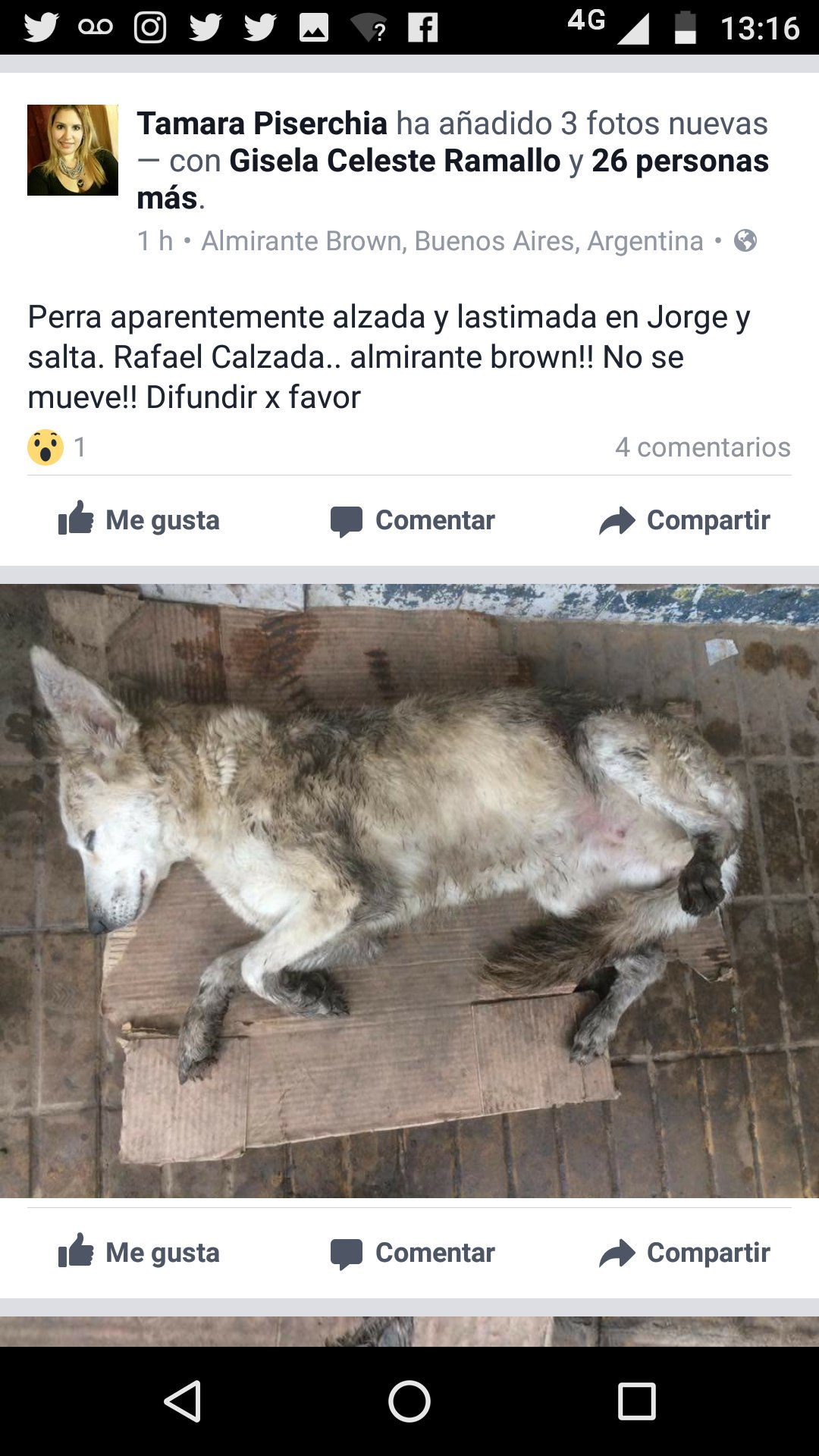 RT @refugioenalerta: #temperley esto pasa por no castrar por favor ayuda se muere https://t.co/JdEKH8oJKB